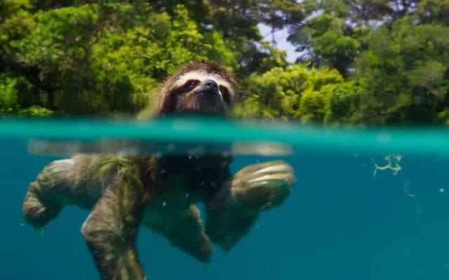 プラネットアースIIの見事な自然の美しさで頭を水上に保ちましょう