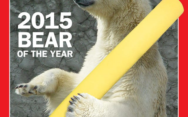 L'ours de l'année Deadspin 2015