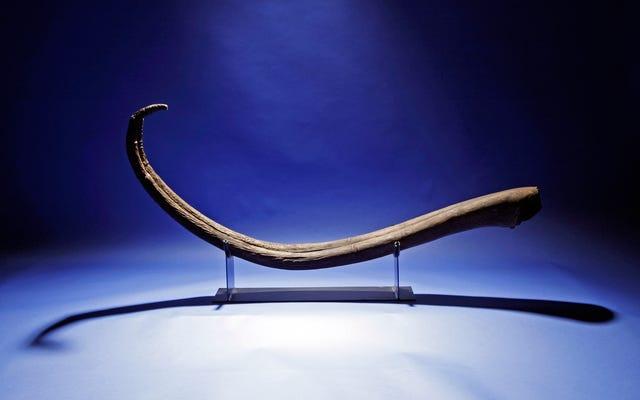 男性メンバーの進化を研究するためにペニスと膣を購入した科学者