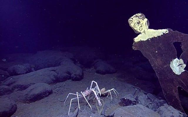 प्रशांत महासागर के तल पर एक लकड़ी का ज़ोंबी दुबका हुआ है
