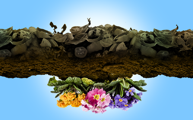 堆肥化を始める方法