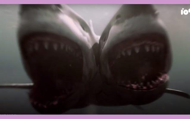Classement des prédateurs les plus pernicieux de Shark Smarts of Horror