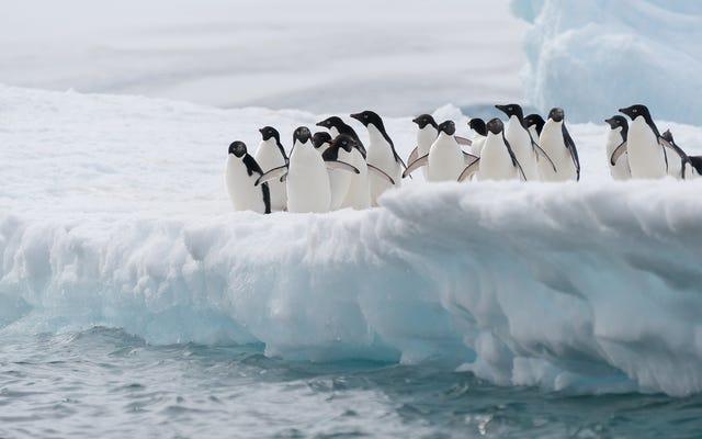氷山の衝突はペンギンのコロニーのほぼ破壊に責任があります