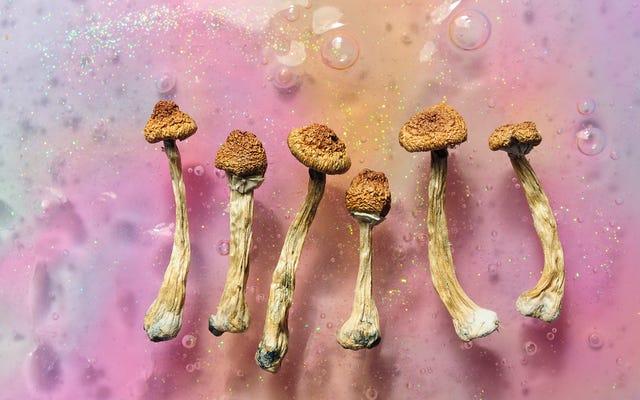 Microdosing là gì và nó có hoạt động không?