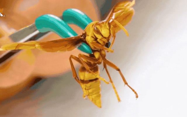 処刑人のハチは世界で最も痛い刺し傷のある昆虫であり、この男はそれをチェックすることにしました