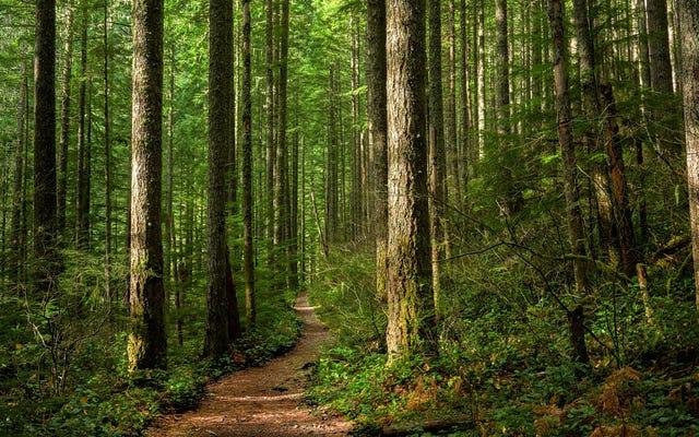 Chill way, way out con Tree.fm, un sitio donde puedes escuchar bosques de todo el mundo
