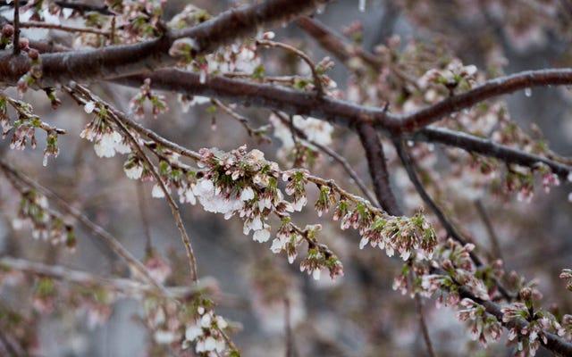 Le printemps est là ... mais c'est toujours l'hiver