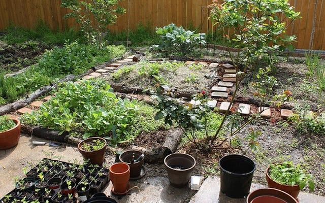 Bahçeniz İçin Bitki Seçerken Sorulacak Sorular