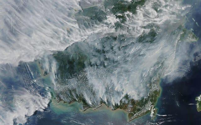煙で満たされた衛星画像は、インドネシアの山火事の邪魔な範囲を明らかにします