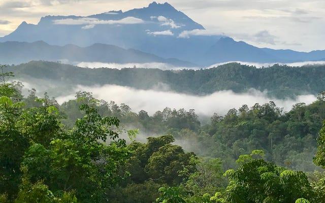 Вырубка лесов - смертный приговор для животных тропических лесов