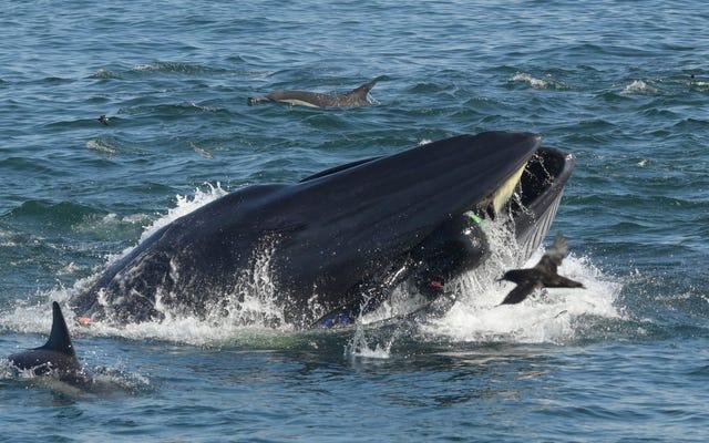 イワシの群れで泳ぎながらクジラに飲み込まれて生き残った写真家