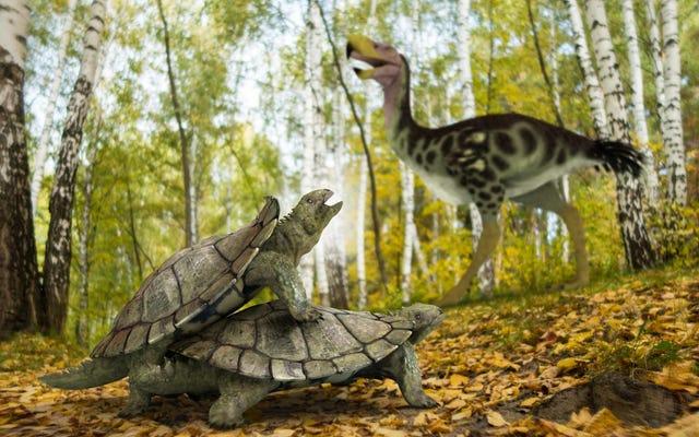 「奇妙な」カメはどういうわけか恐竜を殺した大量絶滅を生き延びました