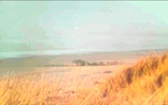 オレゴンでクジラが雨を降らせた日(または人類がダイナマイトを発見した方法は、座礁したクジラをビーチから追い出すのに役に立たない)