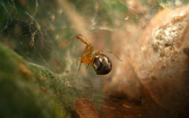 ハリケーンと気温の変化は、クモをより攻撃的にする可能性があります