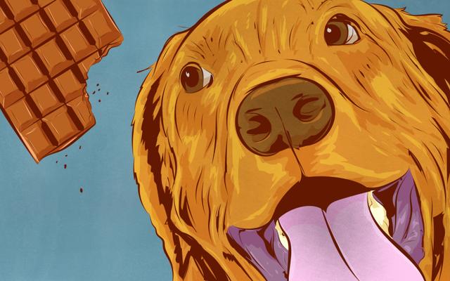 Makanan apa yang paling berbahaya untuk anjing (dan mengapa)
