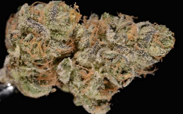 ガールスカウトのクッキー、またはカリフォルニアで最も悪名高い大麻株