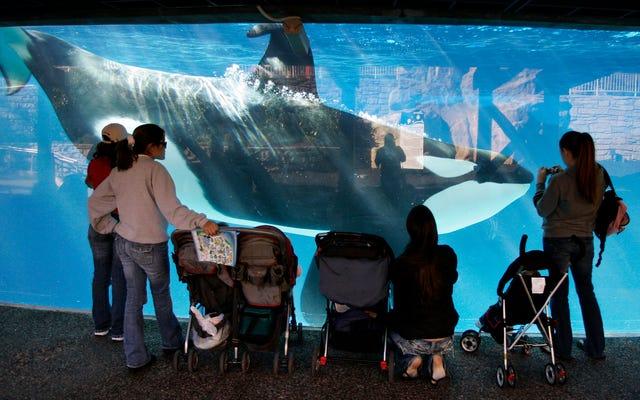 SeaWorld San Diego organizuje swój ostatni program z orka?