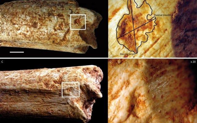人間の祖先は、氷河期の捕食者のスナックでした。