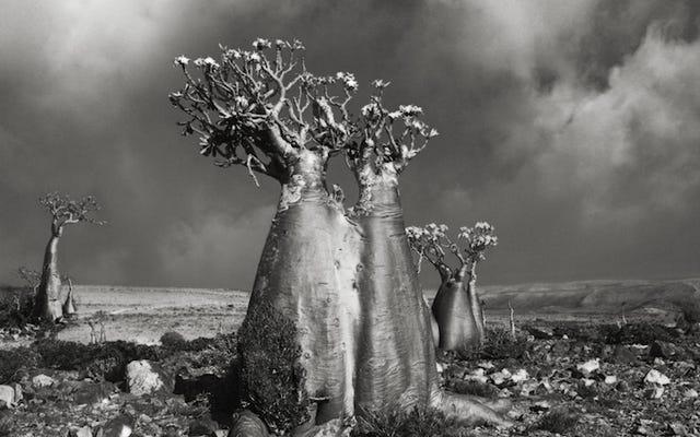 地球上で最も古い木の素晴らしい写真