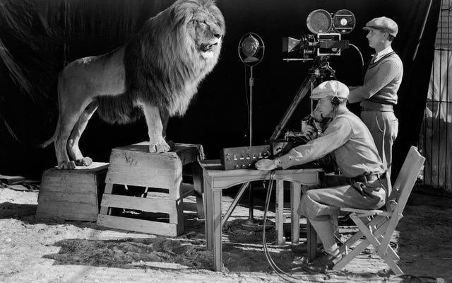 Hai người này đang làm gì trước một con sư tử, và tại sao cảnh này lại là một phần của lịch sử điện ảnh
