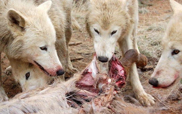 どの動物が屋外で脅威であり、あなたはそれらについて何ができるか