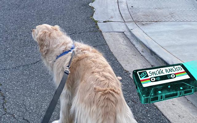เพลงที่ฉันฟังขณะเดินจูงสุนัข