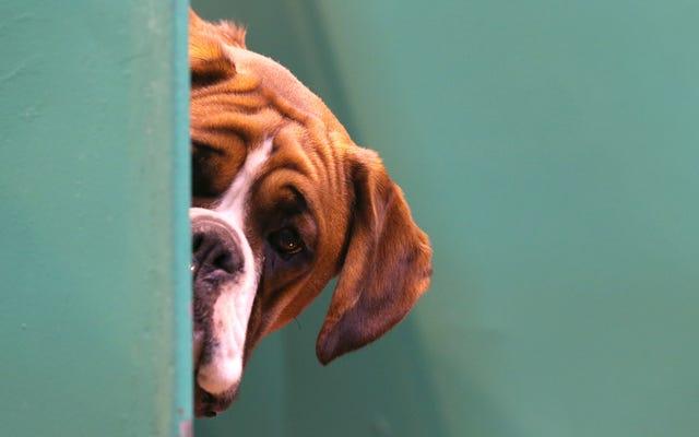 Ветеринары утверждают, что недавно обнаруженный клещевой зародыш в США вызывает отвращение у собак