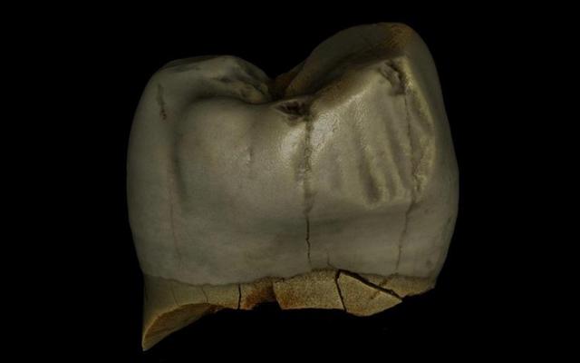 Les Néandertaliens prenaient bien soin de leurs dents, contrairement à certains d'entre nous