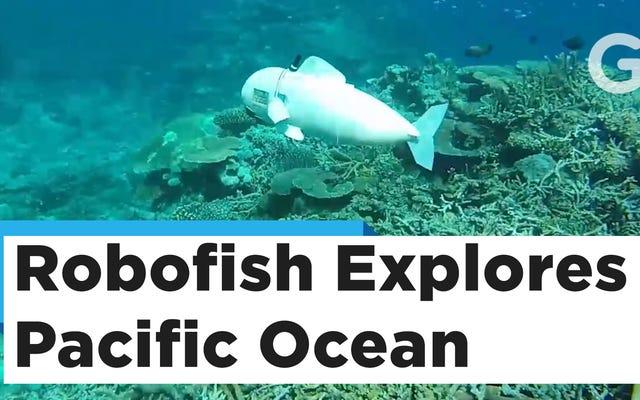 Ученые используют роботов-рыбок с контроллером Nintendo, чтобы шпионить за настоящими рыбами