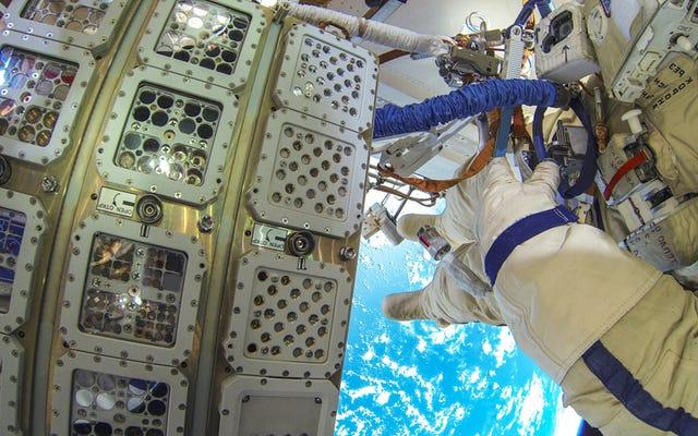 宇宙空間で450日間の試練を乗り切ることができた気まぐれな弾力性のある植物