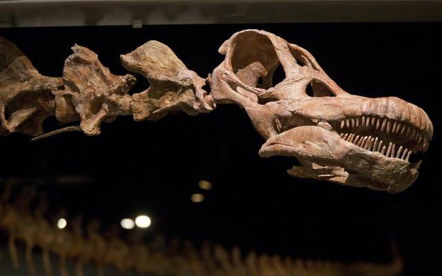 Khủng long được đặt tên mới là loài động vật lớn nhất hành tinh chúng ta từng thấy