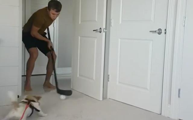 アルテミパナリンの犬は世界で最もかわいいフォアチェッカーです