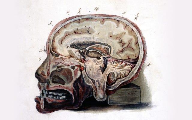 Cómo la naturaleza puede momificar tu cerebro
