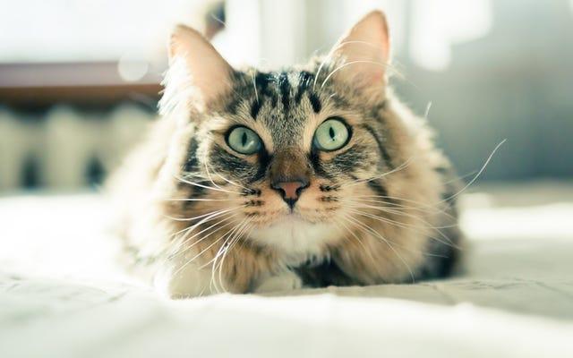 あなたの猫は彼がディックだからといって物事を壊していません
