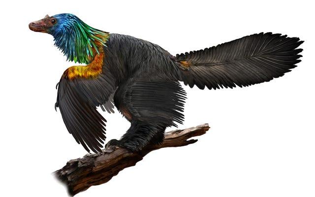 Im Jura gab es auch hühnergroße Dinosaurier mit schillerndem Gefieder für die Werbung