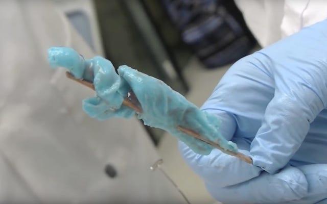 Đây là hình dạng kỳ lạ của âm đạo cá heo
