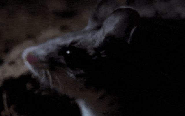 この肉食的なハウリングマウスのために、私が殺し、そして確実に死ぬことを理解してください