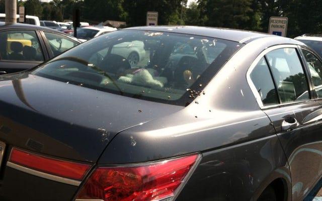 鳥があなたの車に乗ったときに何をすべきか