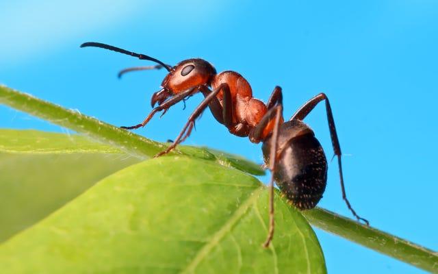 アリを取り除く方法