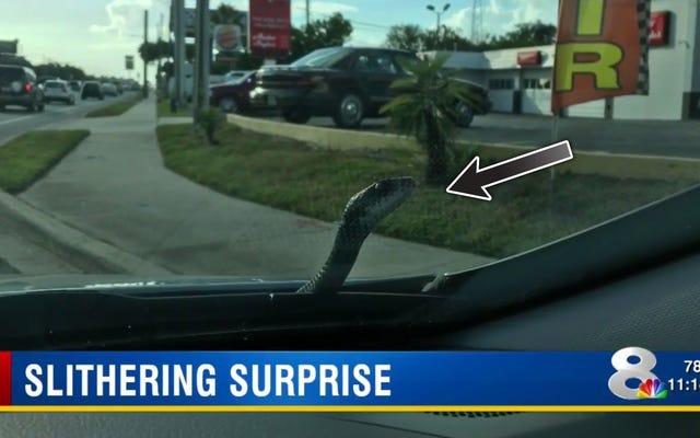चौंकाने वाला शांत ड्यूड छह फुट साँप के रूप में उसकी कार से बाहर चला जाता है यातायात में आश्चर्य