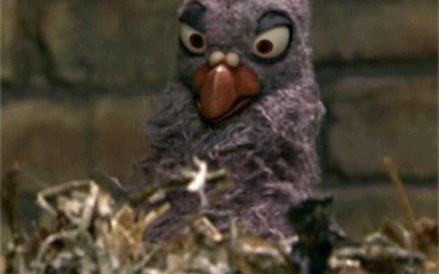 私たちのホテルは鳥のためのものです(文字通り)。Cuh-CAAAAW!