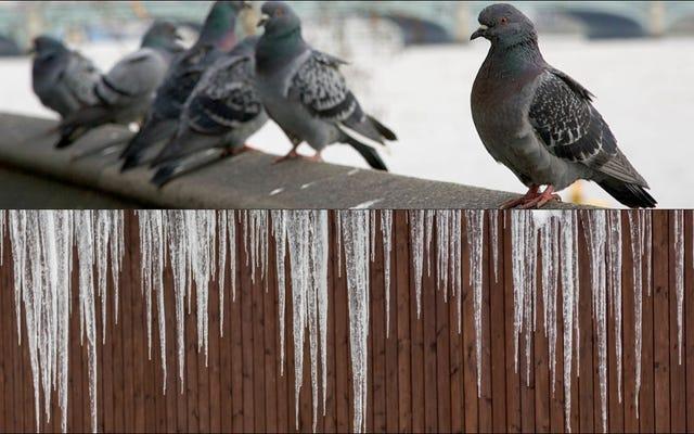 आइकल्स खाने के लिए सुरक्षित नहीं हैं - वे पक्षी के शिकार पॉप्सिकल्स हैं