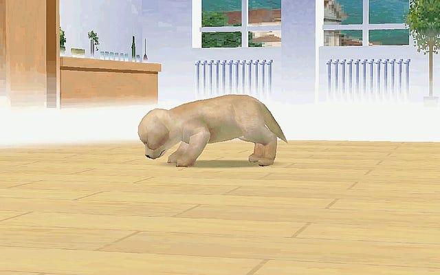 ニンテンドッグスの境界から抜け出すことは子犬の行動を奇妙にします