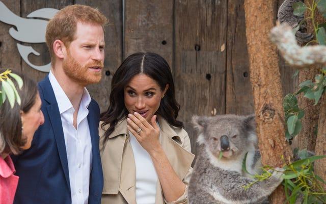 Pewnie, że ten koala jest antymonarchistą