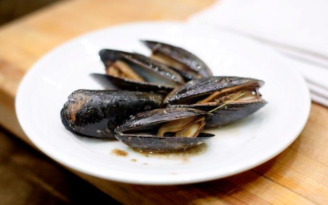 シアトル沖に生息するムール貝はオピオイドの検査で陽性