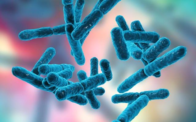 あなたはあなたの膣の微生物叢を分析するべきですか?