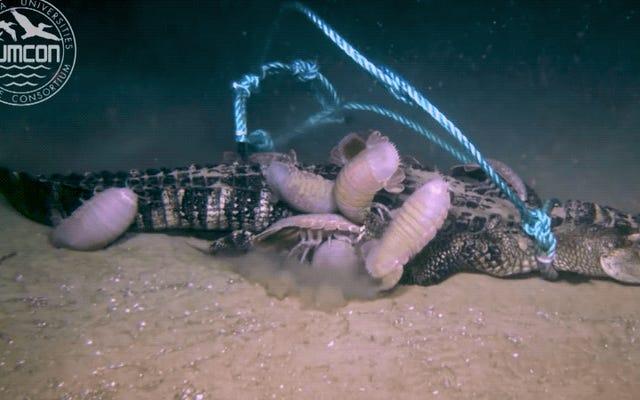 วิดีโอที่ไม่สงบแสดงให้เห็นว่าเกิดอะไรขึ้นกับจระเข้ที่ตายแล้วที่ก้นทะเล