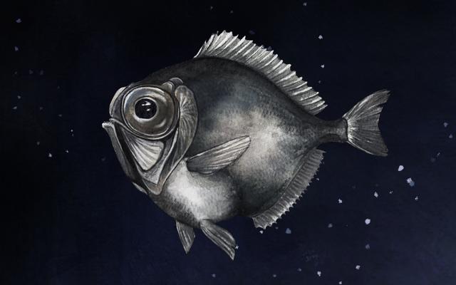 一部の深海魚は、ほぼ真っ暗闇の中で色を見ることができます