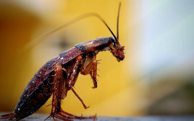 地球上のすべての昆虫が消えたらどうなるか(ヒント:ひどく嫌なもの)