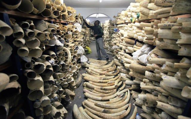 Estados Unidos implementará prohibición 'casi total' del comercio de marfil